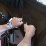 How to Vaccinate a Horse