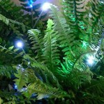 How to Buy LED garden lights