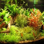 How to Choose Heaters and Thermostats for an Aquarium