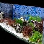 How to Adjust pH in Aquarium Water