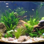 How to Condition the Water in the Aquarium