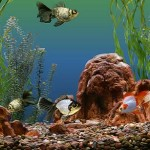 How to Choose an Aquarium