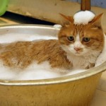How to Train Your Cat to Enjoy Bath-Times