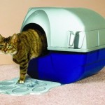 How to Train Your Cat to Use the Litter Tray