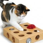 How to Train Your Cat to Play with Toys