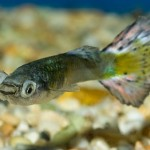 How to Observe Your Aquarium Fish's Health