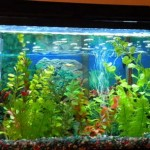 How to Use Hoods and Lighting in Aquarium