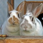 How to Understand Your Rabbit's Behavior