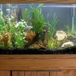 How to Reduce Aggression in Your Aquarium