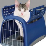 How to Train Your Cat to Travel in His Carrier in the Car