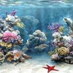 How to Check Aquarium Water