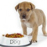How to Store Your Dog's Dry Food Effectively