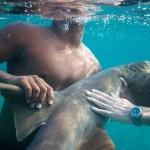 How to Get a Shark as a Pet