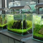 How to Change the Water Safely in an Aquarium