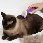 How to Mininise your Cats from Hair Shedding