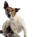 How to Treat and Avoid Dandruff on Dogs