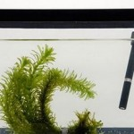 How to Test to Dissolved Oxygen in an Aquarium