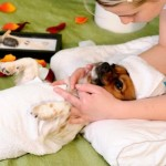 How to Treat Dog's Dry Skin