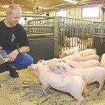 How to Feed Pigs
