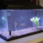 How to Set up a New Fish Tank Heater