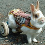 How to Take Care of Handicapped Rabbits