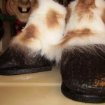 How to Trim Horse Hooves Safely