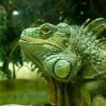 How To Construct a Iguana Terrarium