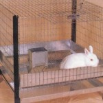 How to Choose a Perfect Rabbit Hutch