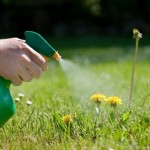How to Control Weeds in your Organic Garden