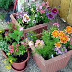 How to Grow Organic Flowers in Containers