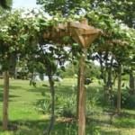 How to Build a Grape Trellis