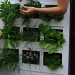 How to Go Green with a Worm Farm