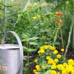 How to Grow Vegetables in the Greenhouse