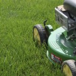 How to Have a Healthy Lawn Naturally