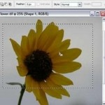 How to Use the Marquee Tool in Photoshop