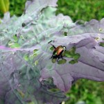 How to Take Advantage of Critical timing for Pest and Disease Control in your garden