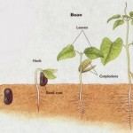 How to Grow Plant from Seed