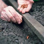 How to Warm up the Soil to Sow Outdoors in your Organic Garden
