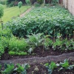 How to Measure the Scale of your Organic Vegetable Garden