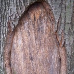 How to Repair Tree Bark