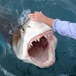How to Survive a Deadly Shark Attack
