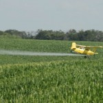 How to Safely Use Pesticides
