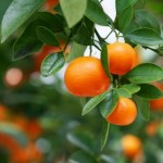 How to Take Care of a Barren Fruit Tree