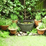 How To Maintain Potted Herb Gardens