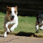 How to Treat Dog Arthritis Naturally
