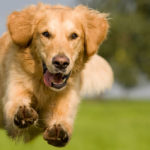 How to Keep Your Pets Happy and Healthy - 5 Ways